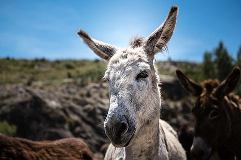 donkey-3118564_960_720